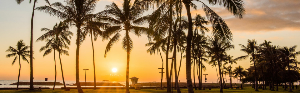 Palm trees in Hawaii by sunset